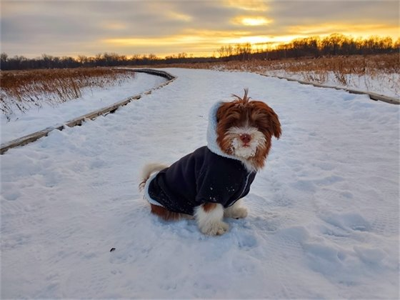 Pets - Juan Del Moral - Cute Puppy in the Snow
