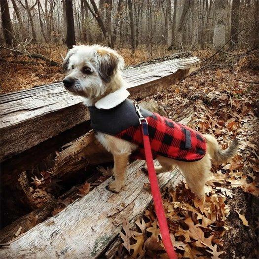 Dog Pioneer