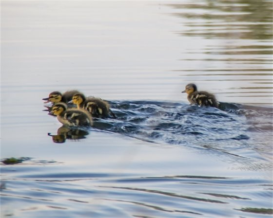 Swimming Lessons - Chase Kvistad