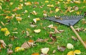 photo of rake and leaves in grass
