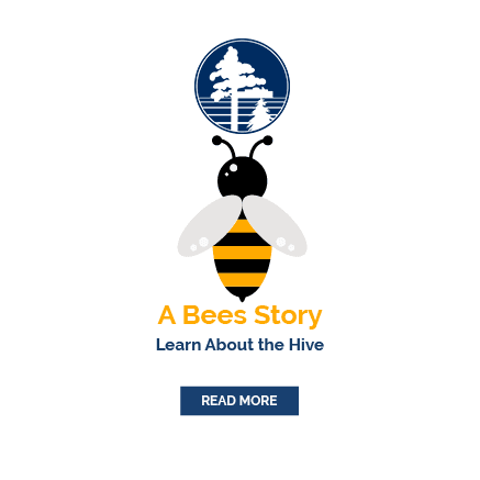 A Bees Story Learn About the Hive
