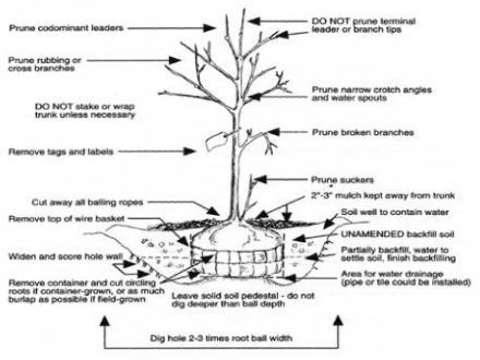 Diagram with tips on how to protect your plants and keep them healthy