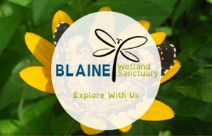 Blaine Wetland Sanctuary - Explore With Us