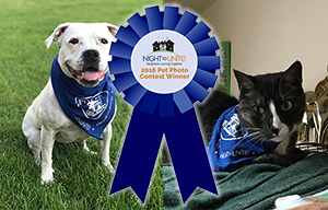 2018 Night to Unite Pet Photo Contest Winners (Cat/Dog)