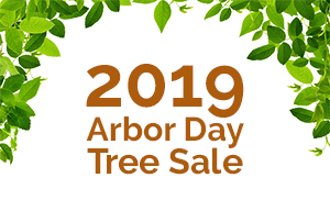 2019 Arbor Day Tree Sale - 300