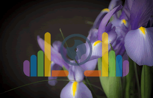 Irises with Impressions of Blaine Logo - 500