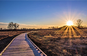 Sunset over boardwalk at Blaine Wetland Sanctuary